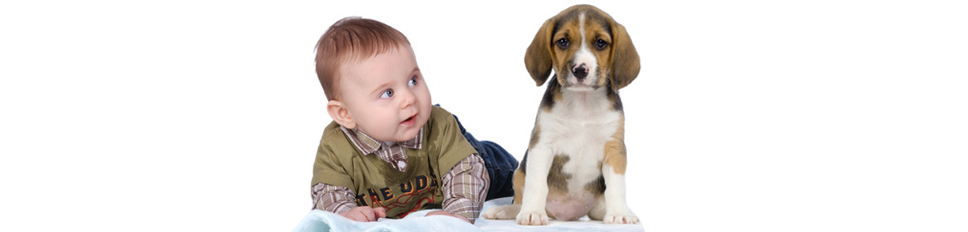 Human baby with Beagle puppy
